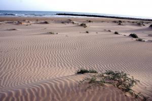 dune Coniglione